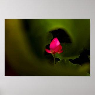 Usted- arte fotográfico -7 del Fairyland del
