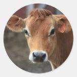 Usted no me piensa es vaca bonita del jersey etiquetas redondas