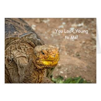 ¡Usted parece joven a mí! Cumpleaños de la tortuga Tarjeta De Felicitación