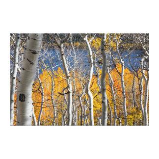Utah, los E.E.U.U. Árboles de Aspen (Populus Impresiones En Lona Estiradas