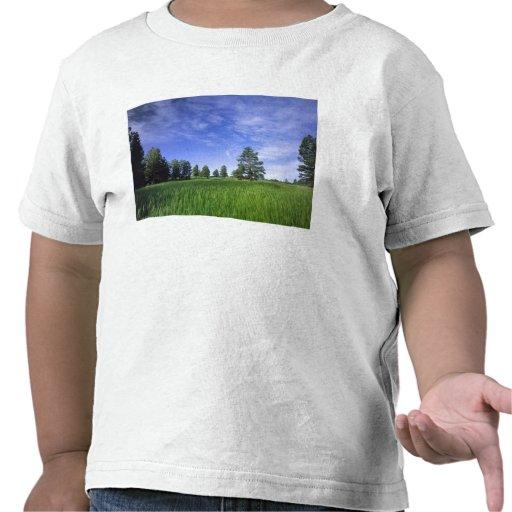 UTAH. LOS E.E.U.U. Pinos ponderosa Pinus Camiseta