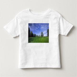 UTAH. LOS E.E.U.U. Pinos ponderosa Pinus Camiseta De Bebé