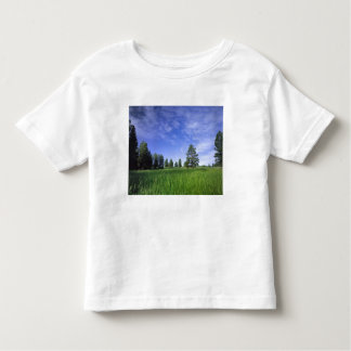 UTAH. LOS E.E.U.U. Pinos ponderosa Pinus Camisetas