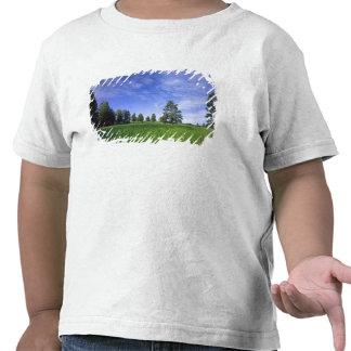 UTAH. LOS E.E.U.U. Pinos ponderosa Pinus Ponderosa Camisetas