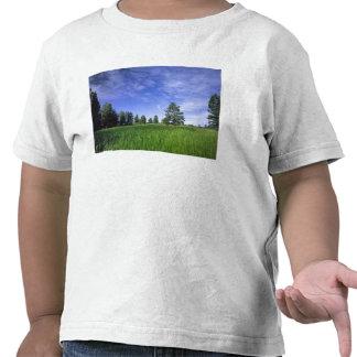 UTAH LOS E E U U Pinos ponderosa Pinus Ponderosa Camiseta