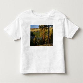 UTAH. Pinos ponderosa y álamo temblón, otoño. Camiseta