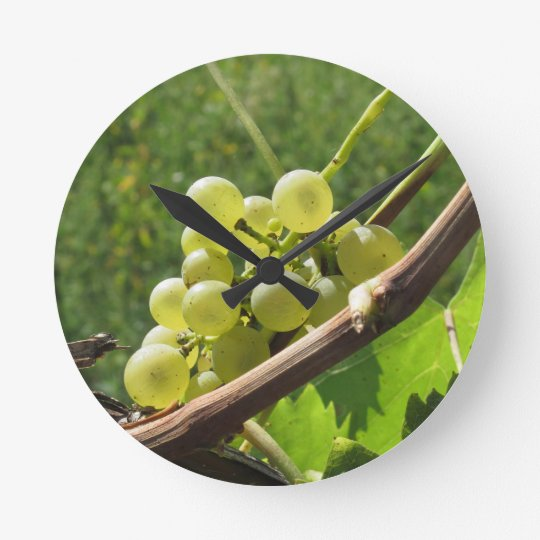 Uvas blancas en la vid. Toscana, Italia Reloj Redondo Mediano