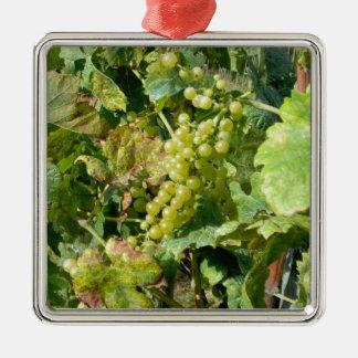 Uvas blancas en un viñedo adorno cuadrado plateado
