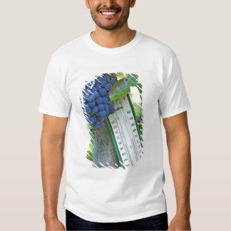 Uvas del Merlot en el la Figeac grave, a del Camiseta