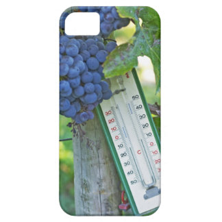 Uvas del Merlot en el la Figeac grave, a del Funda Para iPhone SE/5/5s