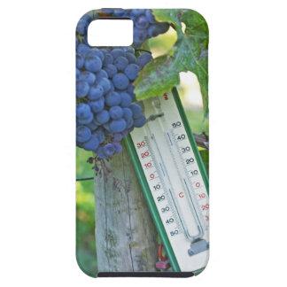 Uvas del Merlot en el la Figeac grave, a del iPhone 5 Protectores