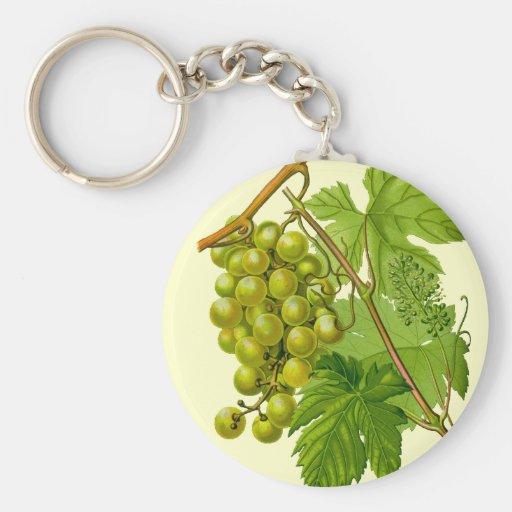 Uvas en el llavero botánico del dibujo de la vid