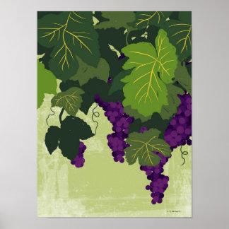 Uvas en la vid póster
