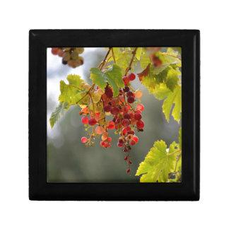 Uvas rojas del primer entre las hojas caja de regalo