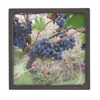 Uvas rojas en la vid con las hojas verdes caja de regalo