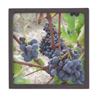 Uvas rojas en la vid con las hojas verdes joyero