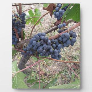 Uvas rojas en la vid con las hojas verdes placa expositora