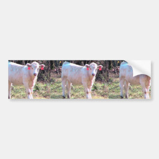 Vaca blanca con los oídos marcados con etiqueta en pegatina de parachoque