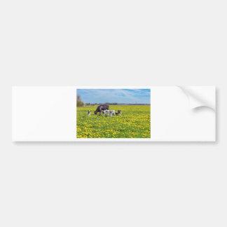 Vaca con los becerros que pastan en prado con los pegatina para coche