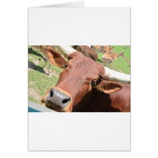 Vaca de Brown del safari