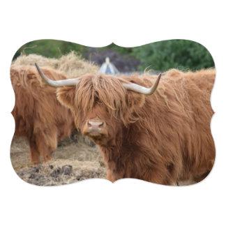 Vaca de la montaña comunicado personal