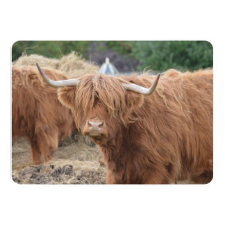Vaca de la montaña anuncios