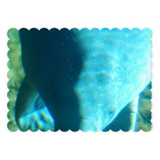 Vaca de mar comunicados