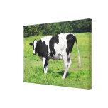Vaca de Vermont Impresión De Lienzo