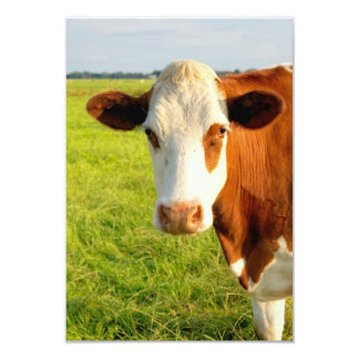 Vaca del frisio de la vista delantera anuncios personalizados