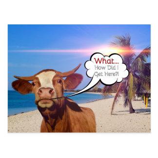 Vaca divertida en la postal de la playa