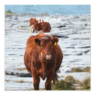 Vaca en Burren Anuncio Personalizado