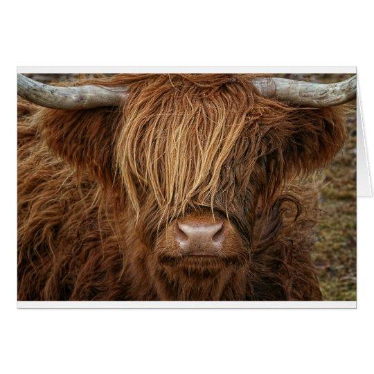 nuevo! Mojö 387199 escocesa Escocia vaca