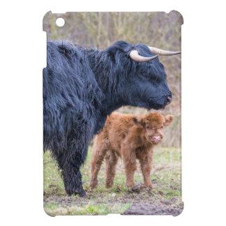 Vaca escocesa negra de la madre del montañés con