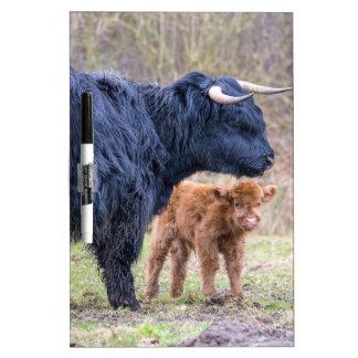Vaca escocesa negra de la madre del montañés con pizarra blanca