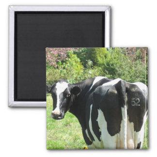 Vaca holandesa número 52 que mira detrás de su imanes
