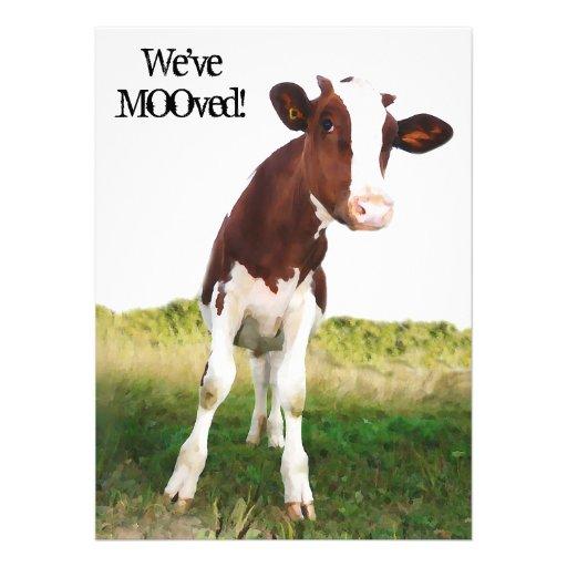 Vaca lechera - Brown pintado y Holstein blanca Comunicado Personal