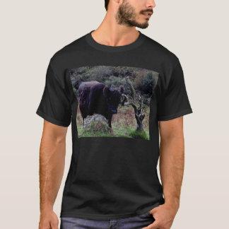 Vaca negra de Dartmoor Galloway que rasguña en Camiseta