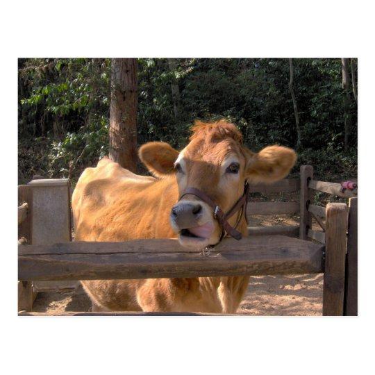 Vaca Postal