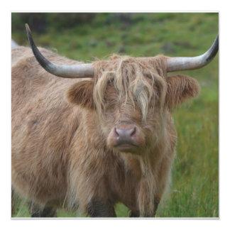 Vaca rubia lanuda de la montaña anuncios personalizados