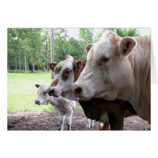 Vacas de la vida de la granja (7416) - tarjeta de felicitación