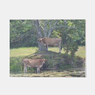 Vacas del país