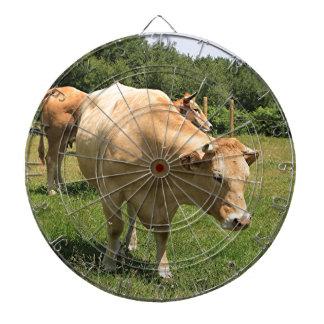 Vacas en el campo, EL Camino, España 2 Diana