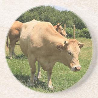 Vacas en el campo, EL Camino, España 2 Posavasos