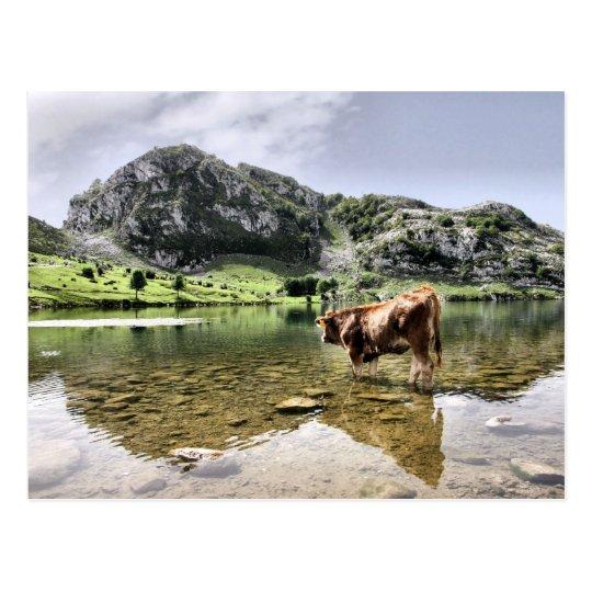 Vacas en los lagos de Covadonga, Asturias Postal