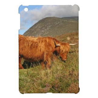 Vacas escocesas de la montaña - Escocia