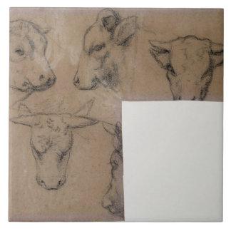 Vache de Cinq Croquis de tete de (lápiz en el pape Azulejo Cuadrado Grande
