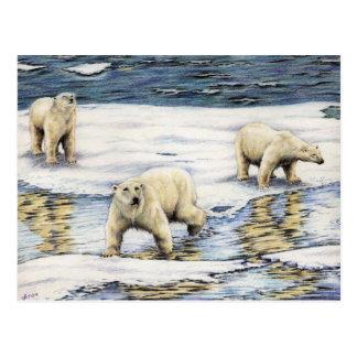 Vagabundos árticos postal