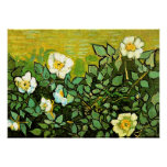 Van Gogh - rosas salvajes, pintura floral de Van G Póster