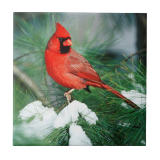 Varón cardinal septentrional en árbol, IL Azulejo De Cerámica