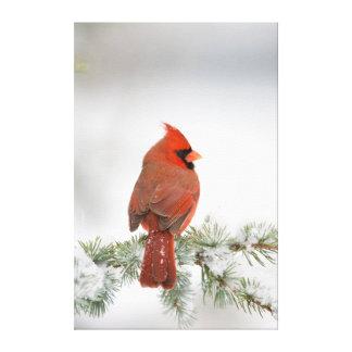 Varón cardinal septentrional en cedro de atlas impresion de lienzo